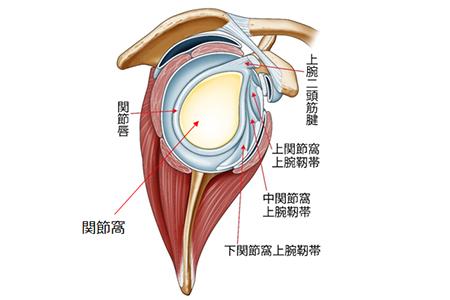 肩関節の図解